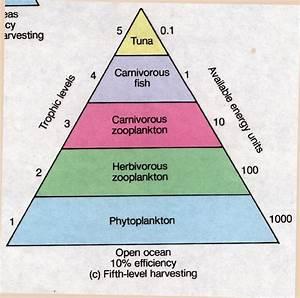 Salient Features of Ecological Pyramids | TutorVista