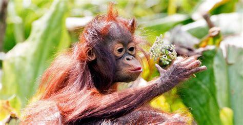 attractions paignton zoo devon south summer holidays