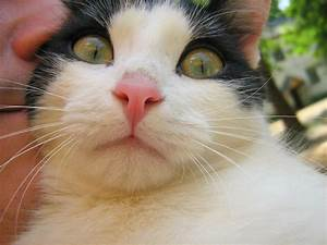 Green Eyes Black and White Cat — Russian Cats Pictures