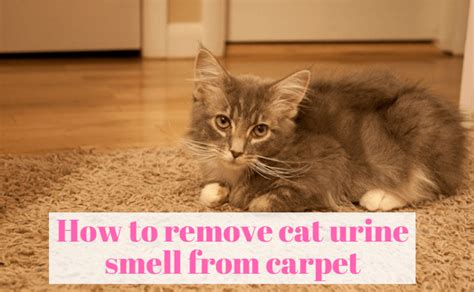 Remove Cat Urine Smell From by How To Remove Urine Smell From Carpet Simple And Easily