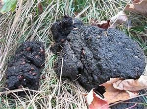 Чистка печени черный кал