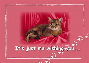 Cat On Bed To Wish Happy Valentine. Free Happy Valentine's ...