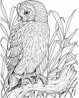 Owl Coloring Pages Printable Owls Perched Adults Sheets Realistic Colouring Birds Adult Books Coloringpages101 Colored Colorful Visit Folder Getdrawings Drawing sketch template