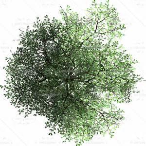 top tree buscar con photoshop resources photoshop landscape
