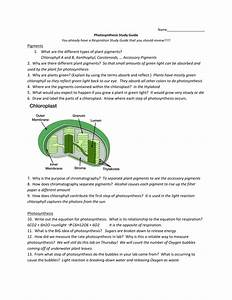Photosynthesis Study Guide Key
