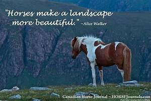 Beautiful Quotes About Horses. QuotesGram