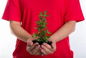 Kleine Fliegen In Der Erde : kleine pflanze mit erde in den h nden download der kostenlosen fotos ~ Frokenaadalensverden.com Haus und Dekorationen