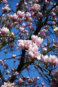 Aktuelle Blumen Im April : fr hjahr april prime blumen baum stockfoto colourbox ~ Markanthonyermac.com Haus und Dekorationen