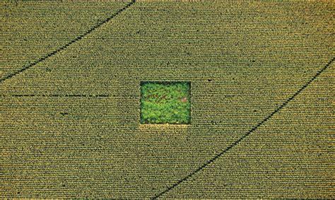 jeux de au bureau un jardin de cannabis dans un ch de maïs