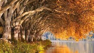 Autumn, Trees, Park, 4k, Wallpapers