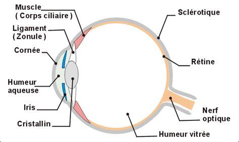 si e social l oeil un œil bionique intégralement remboursé par la