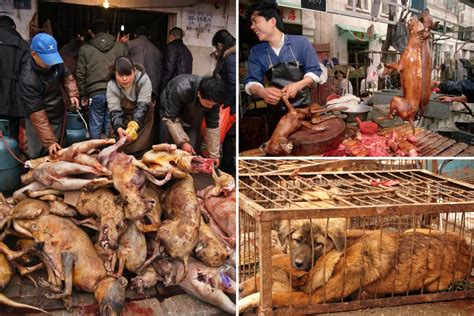 wet markets  china   selling dog meat
