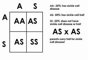 Sickle Cell Conditions Have An Autosomal Recessive Patter