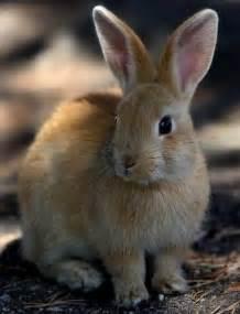 Cute Light Brown Bunny