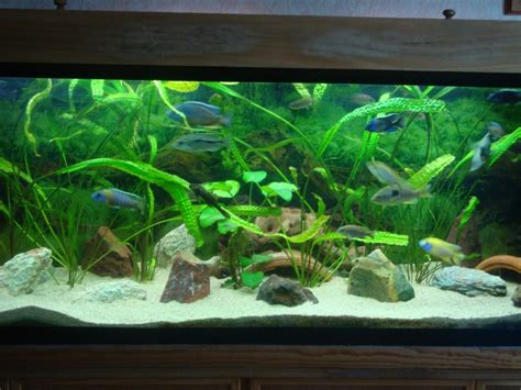 am 233 nagement d 233 coration aquarium asiatique