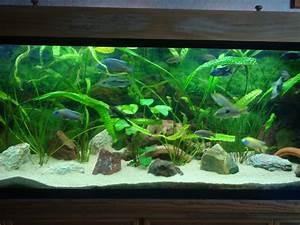 Idee Decoration Aquarium : id e d co d 39 aquarium esth tique ~ Melissatoandfro.com Idées de Décoration