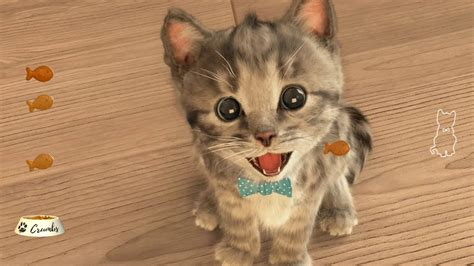 Little Kitten  My Favorite Cat  Fox And Sheep Gmbh Youtube