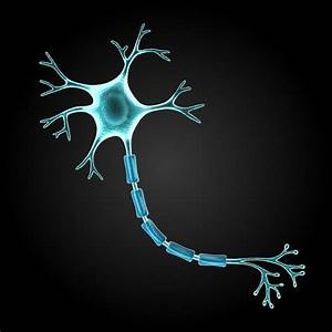 Nerve Cell Diagram - ThingLink