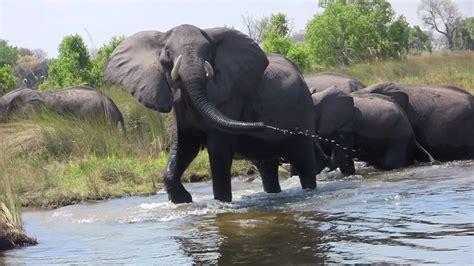 angry elephant youtube