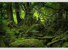 Japan's sacred groves Kanagawa Notebook