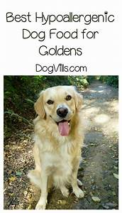 best hypoallergenic dog food for goldens dogvills With best dog food for golden retrievers