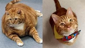 Übergewichtige katzen ernährung