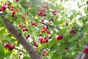 Trees - Fruit Basket