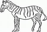 Coloring Zebra Pages Printable Animal sketch template