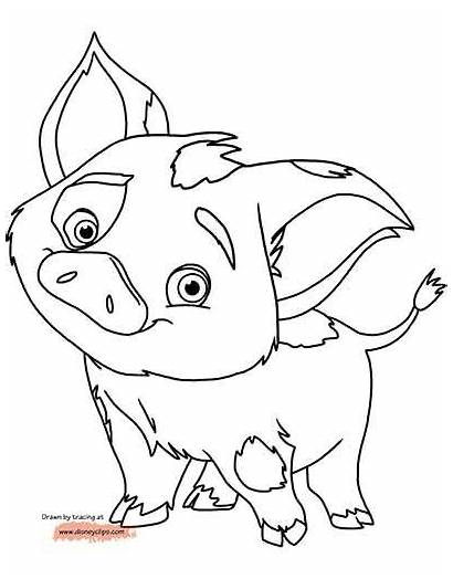 Moana Coloring Pages Disney Pua Pig Drawing