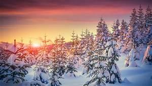 wallpaper pines 5k 4k wallpaper 8k snow sunset
