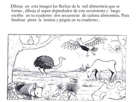 escribe y dibuja en tu cuaderno dos ejemplos de cada tipo unidad 4 ecosistemas