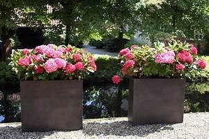 Flieder Im Kübel : sichtschutz mit pflanzk beln im garten auf balkon und ~ Michelbontemps.com Haus und Dekorationen