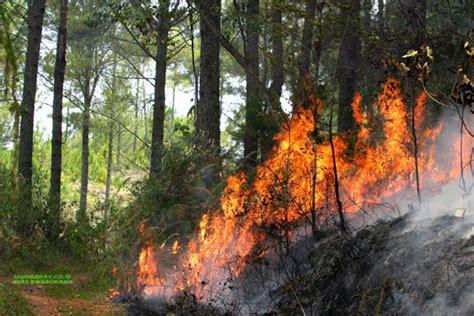 hutan girsang sipanganbolon simalungun terbakar mongabay