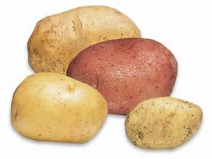 Tuber Vegetables Examples Pictures to Pin on Pinterest ...