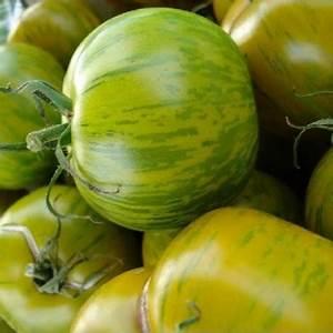 Planter Graine Tomate : tomate green zebra tomate green zebra graines jacques briant plante en ligne tomate green ~ Dallasstarsshop.com Idées de Décoration