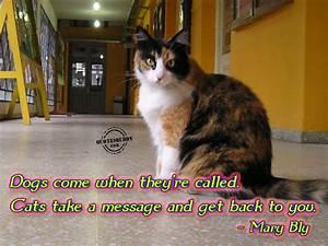 Funny Cat Quotes Inspirational. QuotesGram