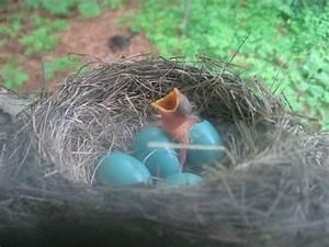 """""""Bird's Nest Custody"""" -- A New Type of Joint Custody for ..."""