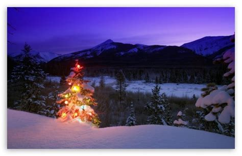christmas tree  lights outdoors   mountains  hd