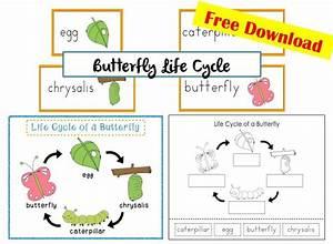 574 Best Spring  Butterflies Images On Pinterest