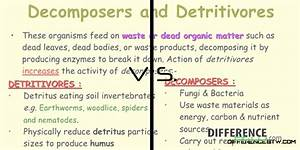 Difference between Decomposer and Detritivore
