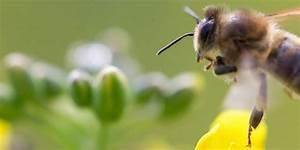 Engelstrompete Blüht Nicht : die bienen retterin was bl ht ist nicht automatisch gut kn kieler nachrichten ~ A.2002-acura-tl-radio.info Haus und Dekorationen