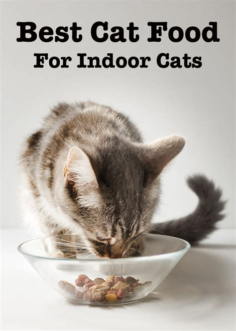 best cat food best cat food for indoor cats top tips and reviews