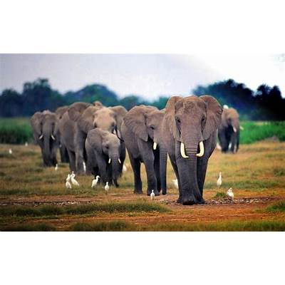 wallpapers: African Elephant Wallpapers