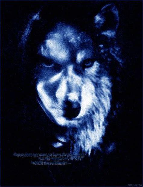 spirit animal mystic black wolf spirit animal animals