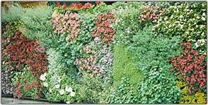 Dauerbepflanzung Für Balkonkästen : bl hende moosw nde f r balkon und terrasse m rz 2000 ~ Michelbontemps.com Haus und Dekorationen
