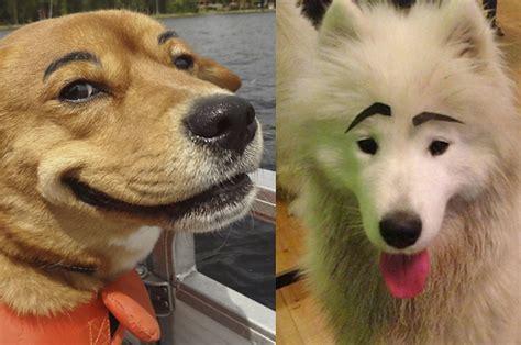 Weitere ideen zu hunde, hund zitat, lustige tiere. 21 Hunde mit Augenbrauen, bei denen Du auf jeden Fall lachen musst