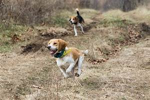 Rabbit Hunting: Getting Started | Missouri Department of ...