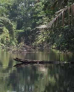 Fotos de Pueblo de Bocas TripAdvisor