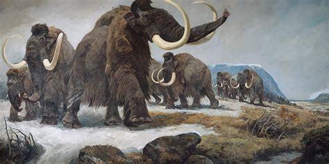 wettlauf um erstes geklontes mammut natur derstandard
