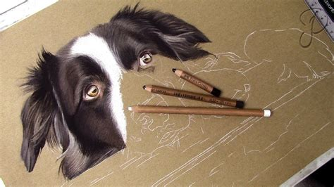 cute border collie pastel drawing speed art painting